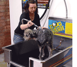 dogwash How to Increase Your Car Wash Profits