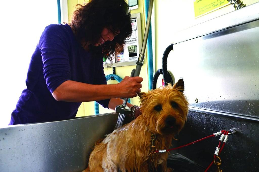 Dog Getting Washed