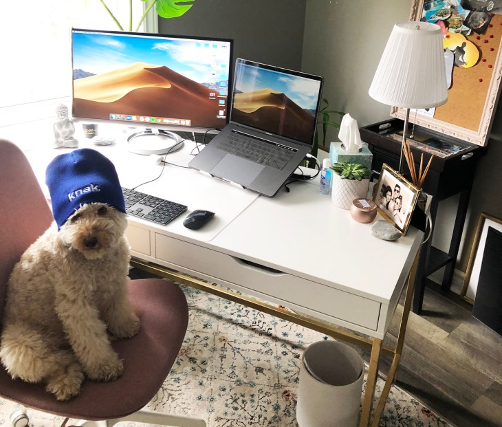 a dog sitting on a desk chair in front of a computer wearing a knak tuque
