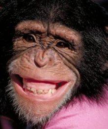 Funny-Chimpanzee-Closeup-Smiley-Face-Picture