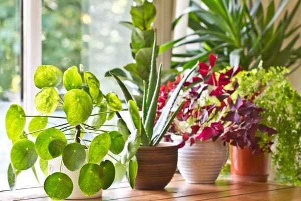 Alana Uygun Bitki Seçimi