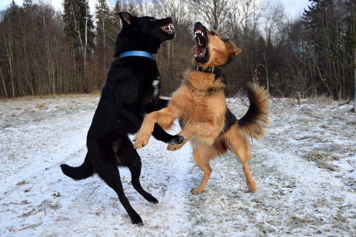 Aggressive Dogs