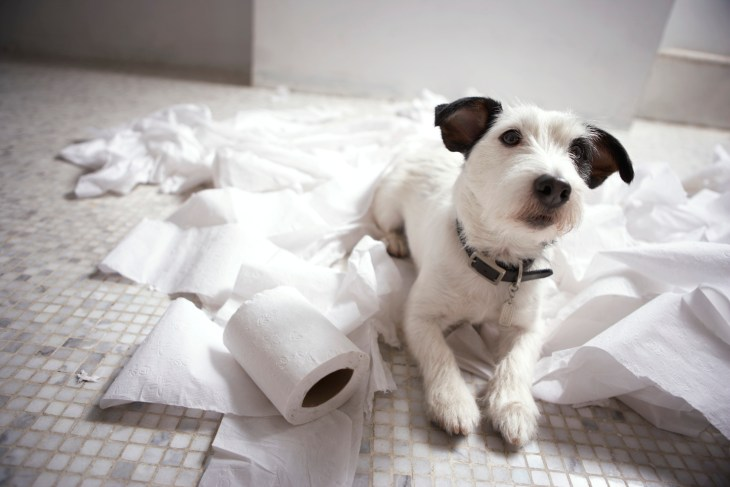 Toilet Training Your Puppy