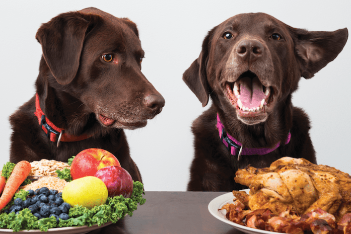 One of the most common mistake made by pet owners is not consulting their vet before they change or dog or cat's diets.