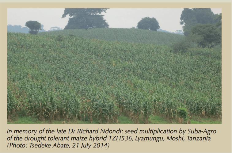 Et, au risque de jouer les empêcheurs d'enfumer en rond, pouvons-nous demander aux chargés de communication du CIMMYT où sont, d'ailleurs, produites les semences de ces 17 variétés DTMA? En effet, si l'on se réfère à la photo (prise fin juillet 2014) et à sa légende en première page de la dernière newsletter DTMA (47) du CIMMYT (septembre 2014), il apparait que l'opération de multiplication de semences de la variété TZH 536 est réalisée par Suba-Agro à Lyamungo, à 1200 mètres d'altitude sur les pentes du Kilimandjaro et ce, en pleine mousson!! Témoin l'herbe verte et drue croissant en bordure de champ! Lyamungo est connu pour son café Arabica et ses bananes et le climat y est encore plus humide que celui de Moshi, avec deux moussons par an. Est-il normal, sur le plan de la logique agronomique, qu'une variété CIMMYT de maïs F1 extrêmement résistante à la sécheresse soit multipliée pour la semence en pleine mousson sur les pentes du Kilimanjaro? Mais peut-être les agronomes du CIMMYT n'ont-ils jamais entendu parler d'épigénétique?