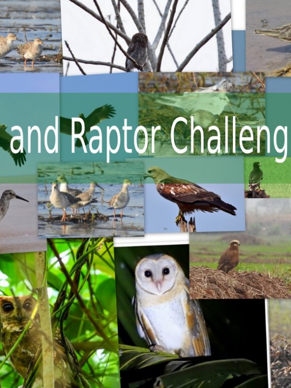 Peep and Raptor Challenge 2017 – Result