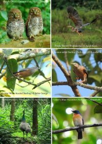 Birds of Thodupuzha [Vol 1, July 2018]-42