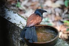 Agitha TG BirdBath 93