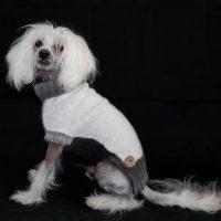 Hundepullover Soft Pearl
