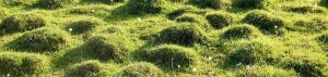 mole-hills-landscape-feature-image