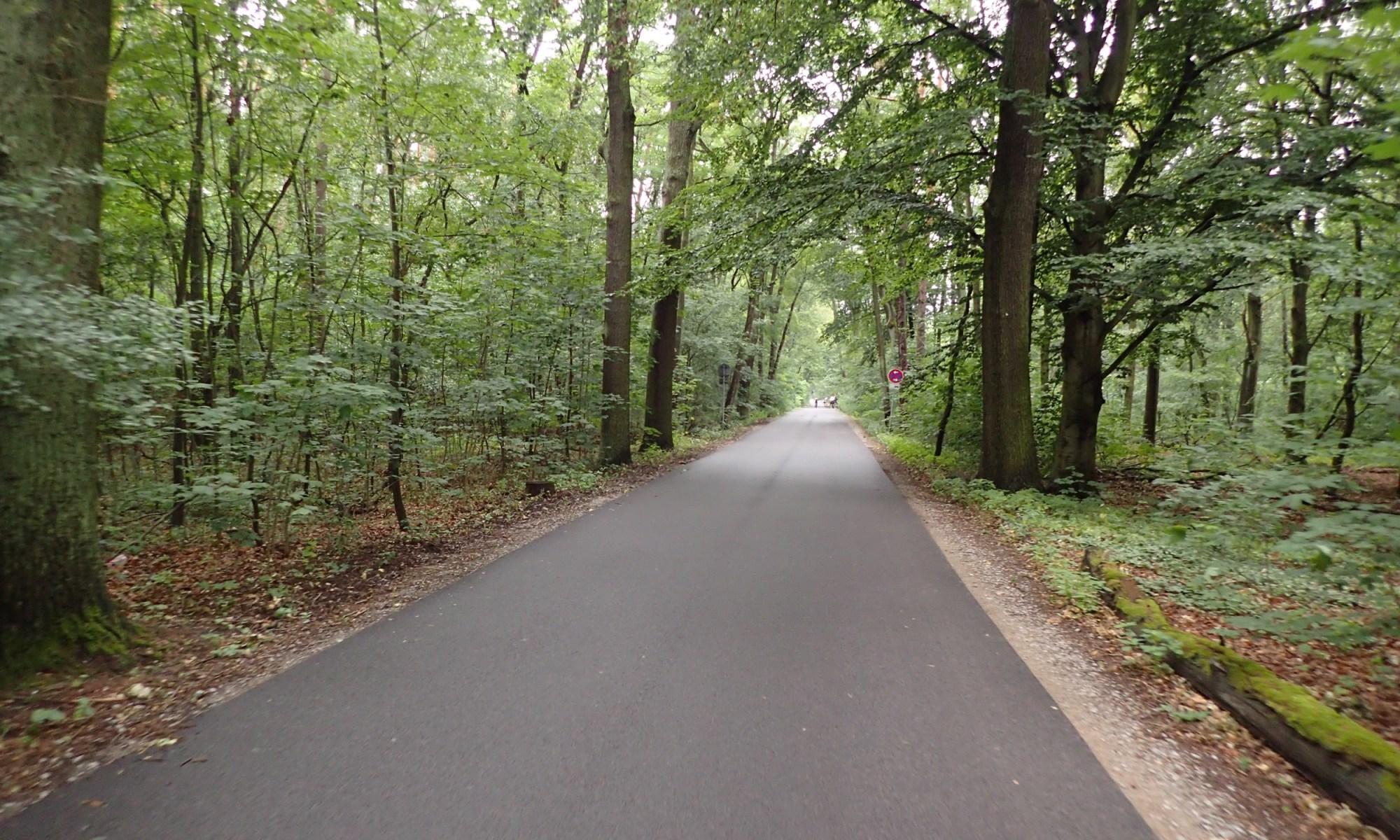 im Wald hinter Sacrow