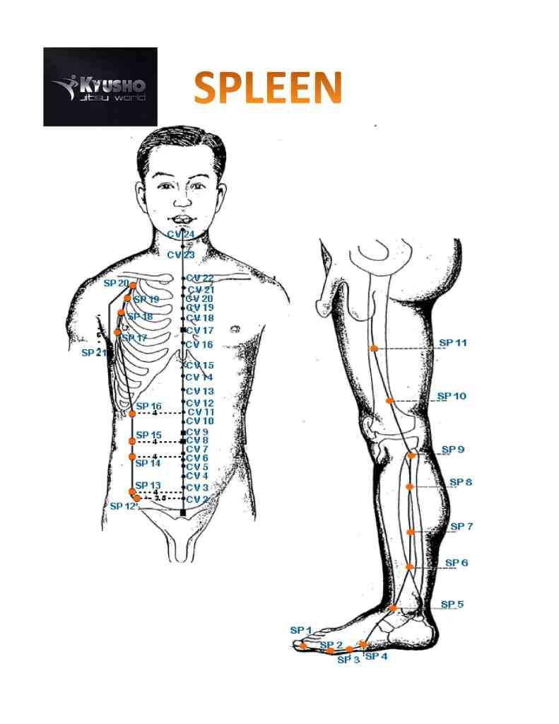 Kyusho Jitsu Nerve Strikes -Spleen Meridian