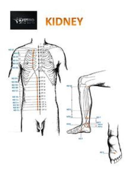 Kidney Meridian