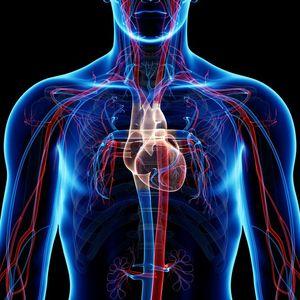 Vascular System Chest