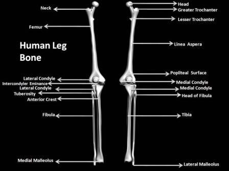 Crippling Leg Pressure Points