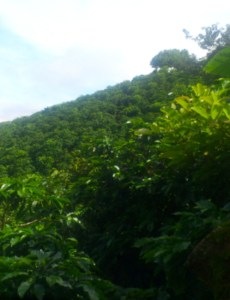 Costa Rica - Plants