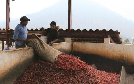 Guatemala-CafeImports-Imgs43