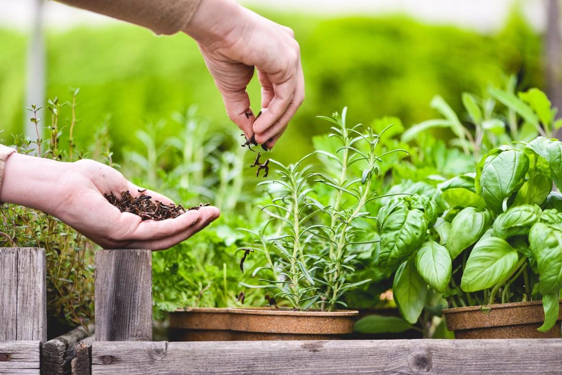 Tea-Garden-Blog-8