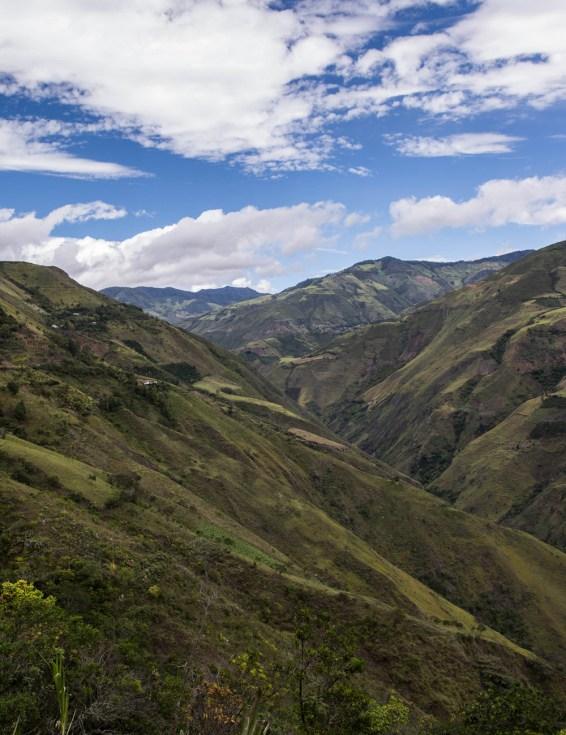 Colombia_Inga_Red_Honey_web3