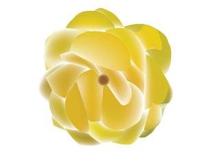 fleur_04-19_begonia