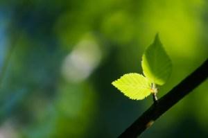 tapis d'entrée écologiques | Mattech | Lalema inc.