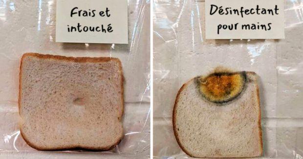 Se laver les mains avec un savon ralentirait la décomposition d'un aliment, ici le pain .