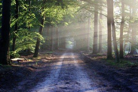chemin rural sentier