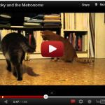 Youtube video - smokey and the metronome