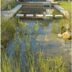 Natural Swimming Pools - chemical free