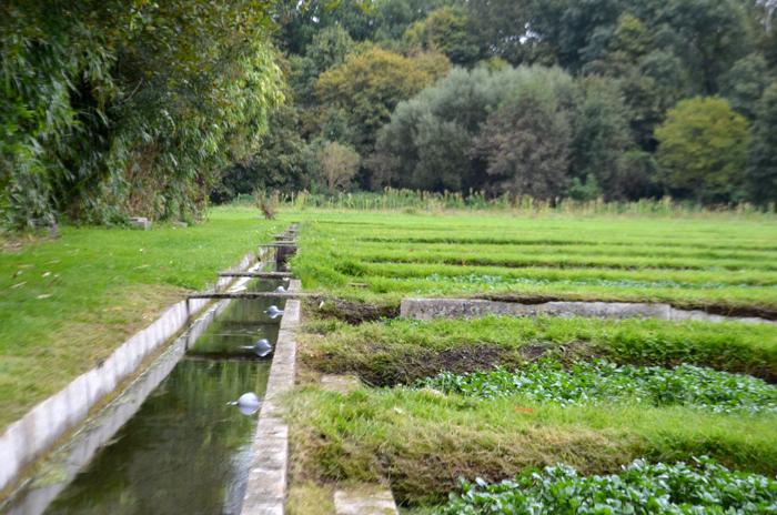 Chaque fossé est alimenté par l'eau de source en mouvement qui termine sa course dans la rivière?