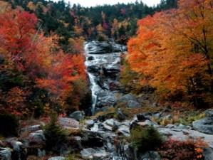 Gallery Spotlight: Fall Foliage