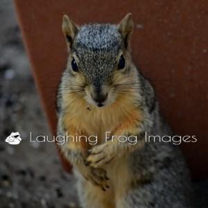 Messy Birds, Happy Squirrel