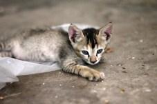 Kitten on Street