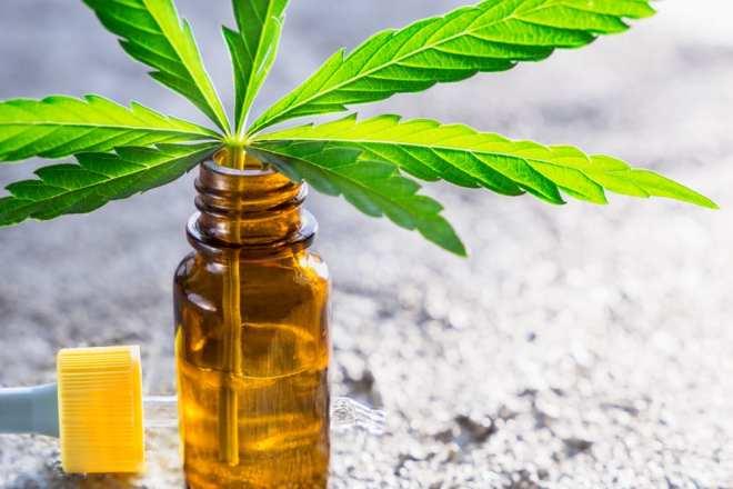 image d'une feuille de marijuana sortant d'une teinture d'huile de CBD, montrant aux gens le produit pour quand the ask