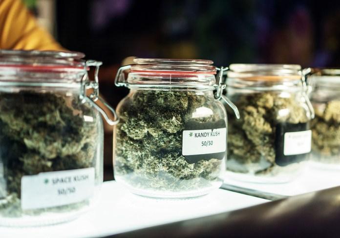 shopping cannabis strains