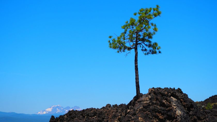 Re-creation of the lone tree in lava fields