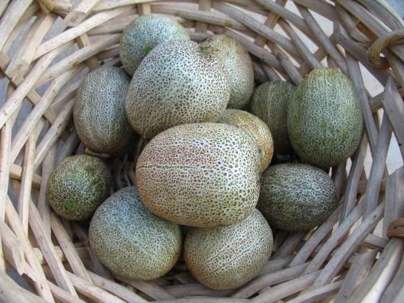 Heirloom Little Potato Cucumber Seeds from Lehmans.com.