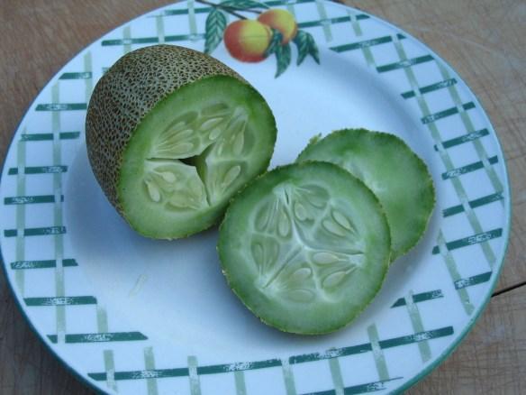 Heirloom Little Potato Cucumber seeds from Lehmans.com