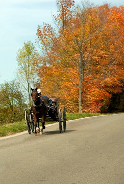 When you spend some time in Amish Country, you may see one of these smaller carts.