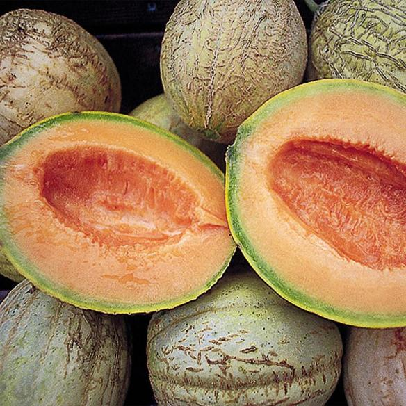 Amish Muskmelon (Cantaloupe) Seeds at our store in Kidron and Lehmans.com.