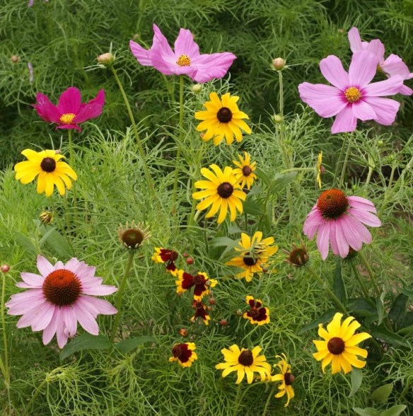 Our specially selected seed mix contains butterfly favorites like black-eyed susan and dwarf cosmos. At Lehmans.com and our store in Kidron, Ohio.