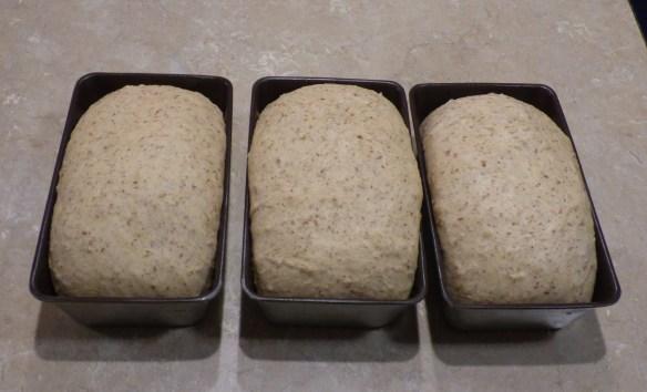 dave-ross-bread-dough-risen-in-pans