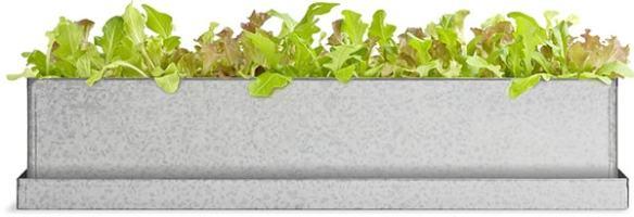 lettuce windowsill grow box