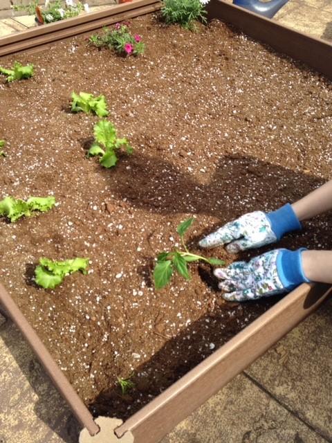 Alli Planting Her Garden