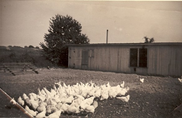my great grandpa's chicken coop