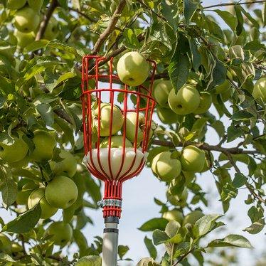 fruit harvester