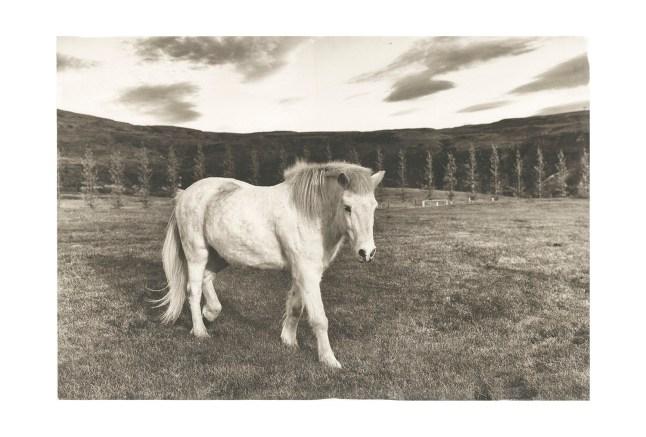icelandic-horse-iceland