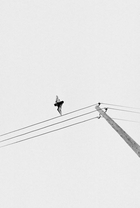 © Alp Sime