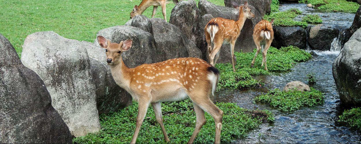 1 jour à Nara