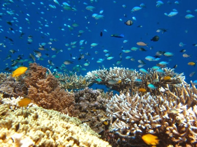 Snorkeling sur l'île de Menjangan